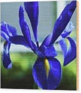 An Irish Iris Wood Print
