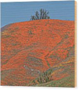 An Ocean Of Orange On The Mountain Top Wood Print