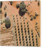 An Olive Grove Between The Succulent Wood Print