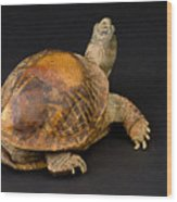 An Ornate Box Turtle With A Fiberglass Wood Print