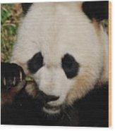 An Up Close Look At A Giant Panda Bear Wood Print