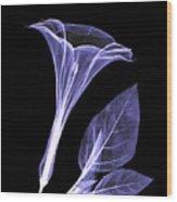 An X-ray Of A Datura Flower Wood Print