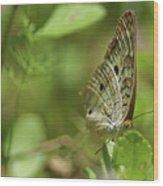 Anartia Butterfly In Wonderland  Wood Print