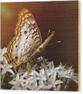 Anartia Jatrophae - White Peacock Butterfly  Wood Print