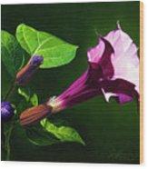 Anastacias Datura Wood Print