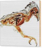Anatomical Plastination Specimen Of A Honey Buzzard Wood Print