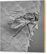 Anatomy Of A Pest - Bw Wood Print