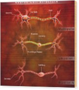 Anatomy Structure Of Neurons Wood Print by Stocktrek Images