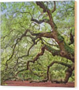 Ancient Angel Oak Tree  Wood Print