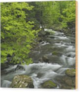 Ancient Cascades In Great Smoky Mountains Wood Print
