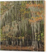 Ancient Cypress Forest Wood Print
