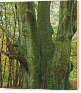 Ancient German Oak Trees In Sababurg Wood Print