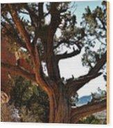 Ancient Juniper Wood Print