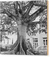 Ancient Kapok Key West Wood Print