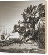 Ancient Live Oak Tree Wood Print