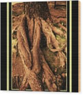Ancient Roots Of Greece Wood Print
