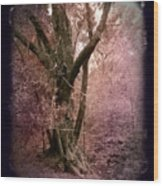 Ancient Tree By A Stream Wood Print