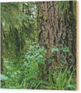 Ancient Trees Wood Print
