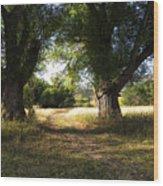 Ancient Willows #1 Wood Print