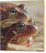 And Then I Found You. European Common Brown Frog Wood Print