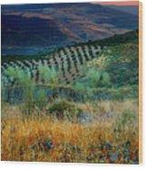 Andalucian Landscape  Wood Print