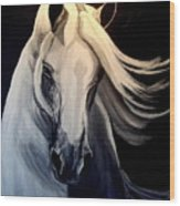 Andalusian Stallion Wood Print