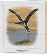 Andrews Frigatebird Fregata Andrewsi 4 Wood Print