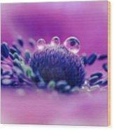 Anemone 05-1 Wood Print