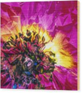 Anemone Abstracted In Fuchsia Wood Print