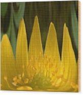 Anemone Flames Wood Print