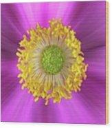 Anemone Hupehensis 'hadspen Wood Print