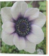 Anemone One Wood Print
