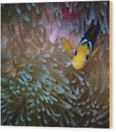 Anemonefish Wood Print