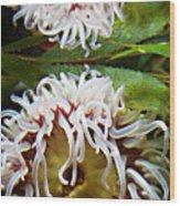 Anenome Reflection Wood Print