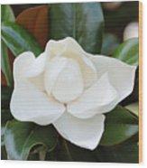 Angel In The Magnolia Wood Print