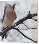 Angel Mourning Dove Wood Print