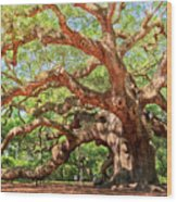Angel Oak - Charleston Sc  Wood Print by Drew Castelhano