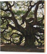 Angel Oak In November Wood Print