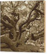 Angel Oak In Sepia Wood Print