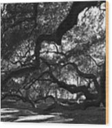 Angel Oak Limbs Bw Wood Print