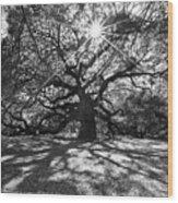 Angel Oak Starbusrt Wood Print
