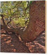 Angel Oak Tree 003 Wood Print