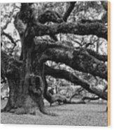 Angel Oak Tree 2009 Black And White Wood Print by Louis Dallara