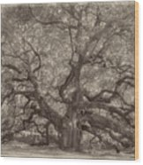 Angel Oak Tree Wood Print