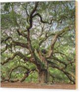 Angel Oak Tree Of Life Wood Print