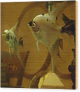 Angelfish Reflections Wood Print