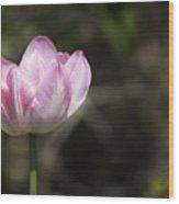 Angelique Peony Tulip 2 Wood Print
