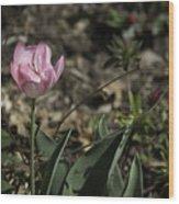 Angelique Peony Tulip Wood Print