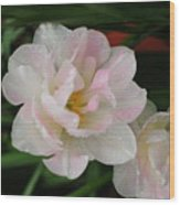 Angelique Tulips Wood Print by Beverly Cazzell