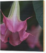 Angel's Trumpet Wood Print